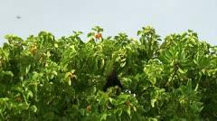 Flying fox at Maldives Stock Footage