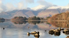 Ducks on Derwentwater Stock Footage