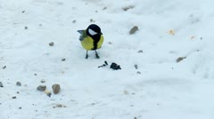 Tit pecking seeds in winter Stock Footage