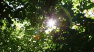Sunlight (with sound) 2 Stock Footage