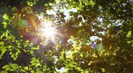 Sunlight (with sound) Stock Footage