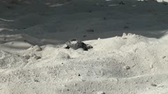 Newborn turtles baby swim in the sea Stock Footage