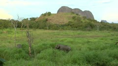 Elephants eating grass in Niassa Reserve, Mozambique. Stock Footage