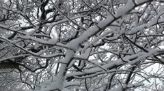 Close up of trees branches covered with snow Stock Footage