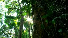 Sunlight shines through the branches of  the trees. Stock Footage