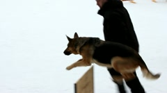 German shepherd dog overcomes obstacles Stock Footage