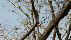 Small chipmunk on tree Stock Footage