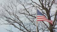 Stock Video Footage of American Flag by a tree