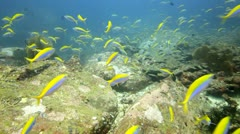 Fast schools of fish over rock boulders Stock Footage