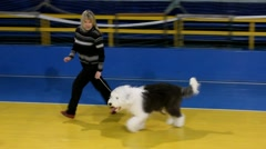Dog bobtail Stock Footage