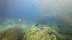 Small fish over rocky coral reef Stock Footage