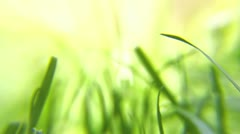 Green grass blowing in the summer breeze 2 HD - stock footage