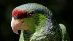 Parrot Close Up Stock Footage