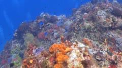 Underwater scenery,caribbean blue Stock Footage