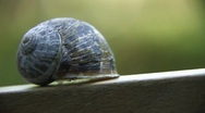 Stock Video Footage of Snail Shell - Slow Panning Shot HD