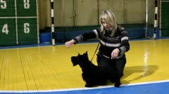 The hostess is preparing to show the puppy scottish terrier Stock Footage