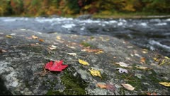 Maple leaf and river in fall color, Vermont, USA Stock Footage