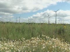 Spin windmill daisy Stock Footage