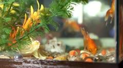 Goldfish Stock Footage