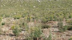 Highland flora panning Stock Footage