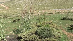 Highland flora and apiary site Stock Footage