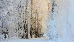 winter frozen birch woods in morning light - stock footage