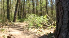 Cyclist riding on a bikepath in forest Stock Footage