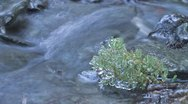 Stock Video Footage of Timelapse of creek with twig capsulated by ice