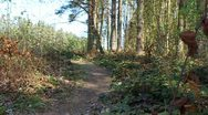 Stock Video Footage of Cyclist on singletrack in forest