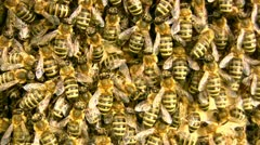 Inside crowded beehive - stock footage