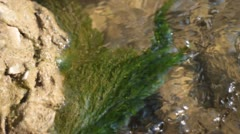 Algae in stream - stock footage