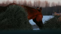 Horse at Sunset - stock footage