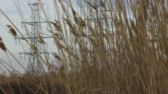Powerlines through reeds - stock footage