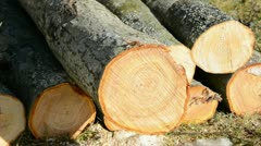 to saw firewood in the yard - stock footage