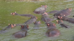 Hippos in Lake Stock Footage