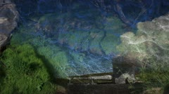 Geothermal Forest Water Collage Stock Footage