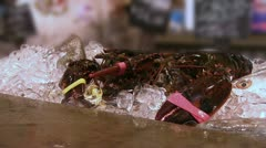 Lobsters sitting on ice Stock Footage