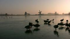 Feeding ducks on the ice at sunrise Stock Footage
