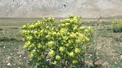 Highland flora Stock Footage