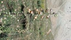 Highland flora verticals Stock Footage