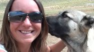 Two huge young dogs nuzzle a woman Stock Footage