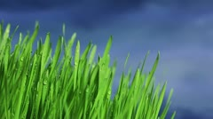 Gras Stock Footage