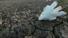 Skull Desolate Landscape Man Stock Footage