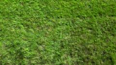 Little boy rolls by green grass plot Stock Footage