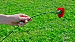 Kids hand hold red flower an ten put it away Stock Footage