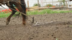 Farmer Plowing a Field with a horse Stock Footage
