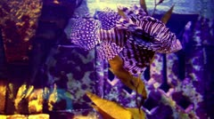aquarium sealife closeup - stock footage
