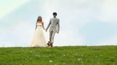 Groom and bride go keeping for hands downwards on meadow, terrier nearby runs Stock Footage