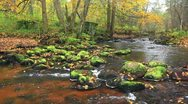 Stock Video Footage of river in autumn forest