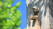 Starling feed his nestling Stock Footage